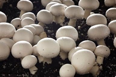 Places_FR_Mushrooms_Parwan Valley _140512 003