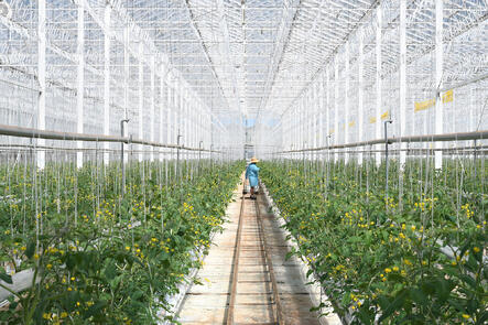 Places_FR_Two Wells_Glasshouse_6984