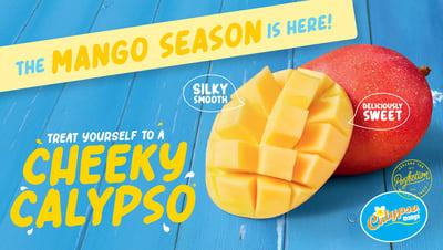 calypso season is here-01